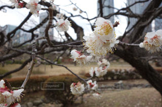 木の枝に座っている鳥の写真・画像素材[1081852]