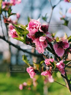 近くの花のアップの写真・画像素材[1082483]