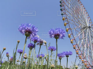 花と観覧車の写真・画像素材[1185041]