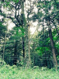 森林の写真・画像素材[1248388]