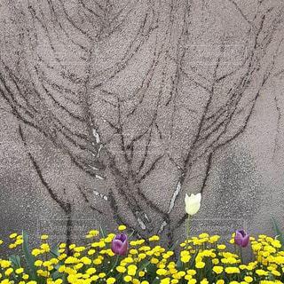 隅田川沿い遊歩道の花の写真・画像素材[2052003]