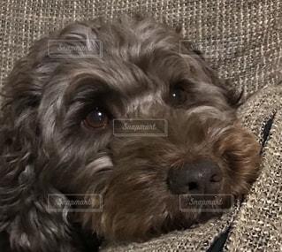 近くに犬のアップの写真・画像素材[1184008]