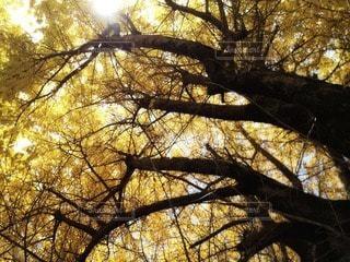 黄色に輝くの写真・画像素材[35337]
