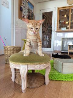 猫の写真・画像素材[230974]