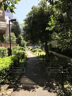 都会の緑の写真・画像素材[1083426]