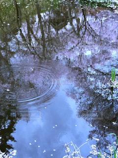 水面の逆さ桜の写真・画像素材[1117275]
