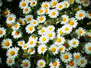 近くの花のアップの写真・画像素材[1086592]