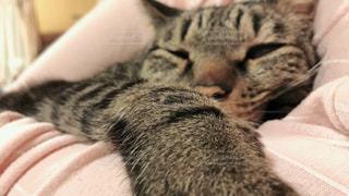 ベッドの上で横になっている猫の写真・画像素材[1083190]
