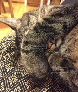 光が眩しくて顔を隠す猫の写真・画像素材[1083267]