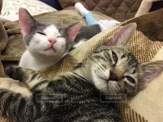 眠いながらも起きようとする子猫たちの写真・画像素材[1083280]