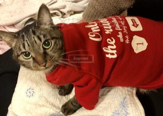 赤い洋服を着た猫 - No.1083282