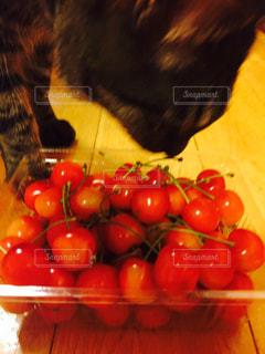 さくらんぼが食べたい猫の写真・画像素材[1083593]