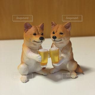 仕事終わりに一杯する柴犬の写真・画像素材[1085306]