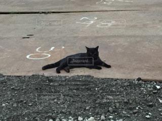 地面に横たわっている黒猫の写真・画像素材[1085313]