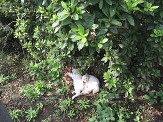 庭の猫の写真・画像素材[1085317]