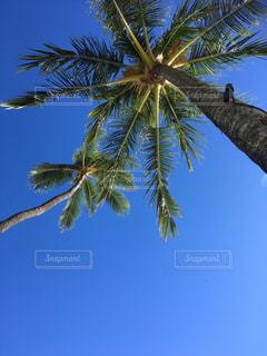 ヤシの木の写真・画像素材[877262]