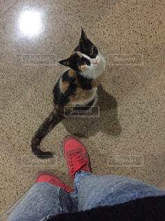 地面に座っている猫 - No.1085106