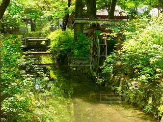 近くの緑豊かな緑の森 - No.1129875