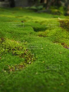 緑の絨毯の写真・画像素材[1084489]