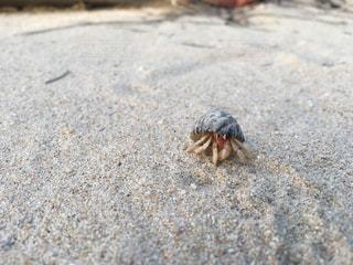 沖縄のビーチのヤドカリ - No.1084490