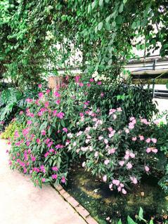 近くのフラワー ガーデンの写真・画像素材[1092269]