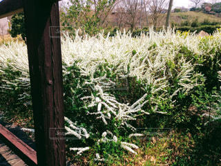 春の庭園の写真・画像素材[1095452]