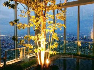 夜景と木の写真・画像素材[1101459]