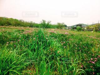 近くに緑豊かな緑のフィールドのの写真・画像素材[1101661]
