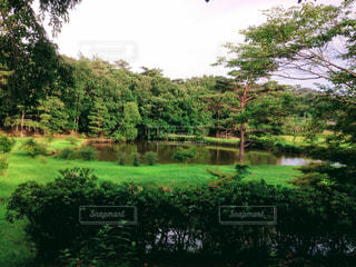 緑豊かな緑のフィールドの真ん中の木の写真・画像素材[1101666]