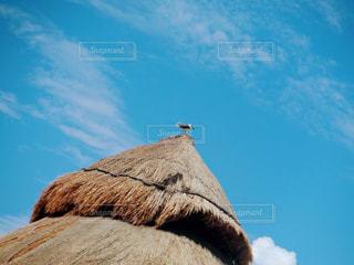 ビーチの小屋に座っている鳥の写真・画像素材[1120247]