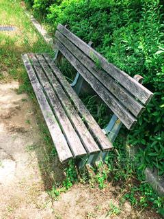 緑豊かな公園のベンチの写真・画像素材[1190923]