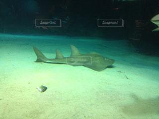 水面下を泳ぐ魚たちの写真・画像素材[1203288]