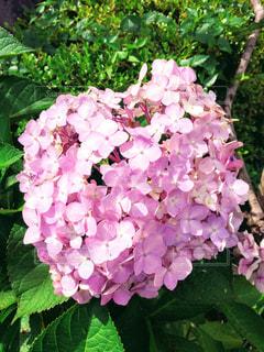 近くの花のアップの写真・画像素材[1275796]