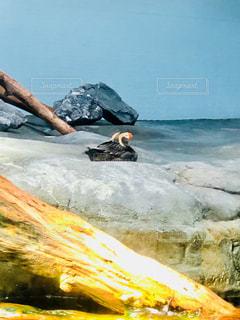 岩の上の水鳥の写真・画像素材[1389754]
