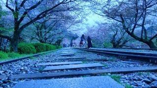 線路と桜の写真・画像素材[72839]
