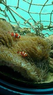 色鮮やかな魚たちの写真・画像素材[82510]