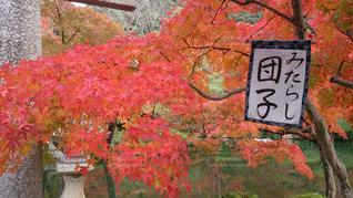 京都の秋の写真・画像素材[251900]