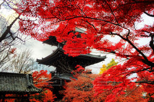 秋の写真・画像素材[340107]