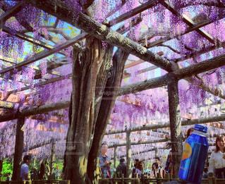 花の写真・画像素材[459031]