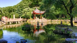 池の写真・画像素材[526838]