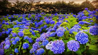 花の写真・画像素材[541543]
