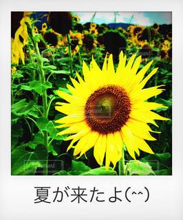 花の写真・画像素材[587070]