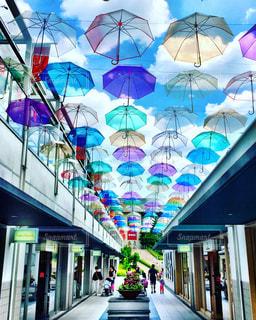 傘の花の写真・画像素材[599757]