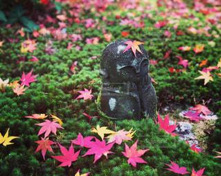 わらべ地蔵と紅葉の写真・画像素材[892017]
