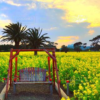 菜の花畑の夕日の写真・画像素材[1061232]