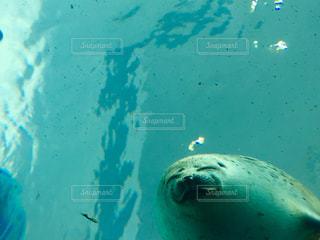 水面下を泳ぐ魚たちの写真・画像素材[1085462]
