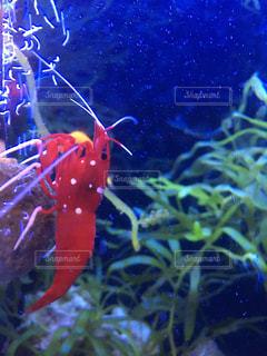 サンゴの水中ビューの写真・画像素材[1085470]