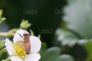 近くの花のアップの写真・画像素材[1085585]