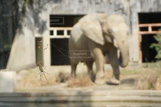 建物の前に歩いている象の写真・画像素材[1086414]