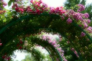 花のアーチの写真・画像素材[1088692]
